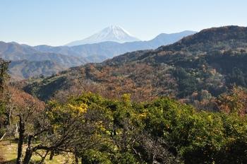 ゆずの里の富士山.jpg
